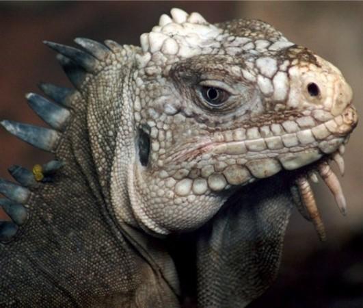 全球最恐怖最罕见动物:长相丑陋的三眼恐龙虾