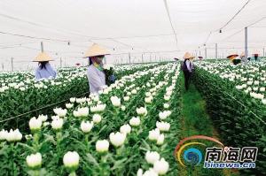 海南花卉产业品牌知名度低 专家建议依托旅游业发展
