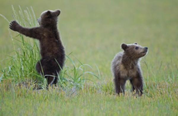 而人们对他的作品也有强烈反响,对可爱的棕熊幼崽及其家族间的亲密