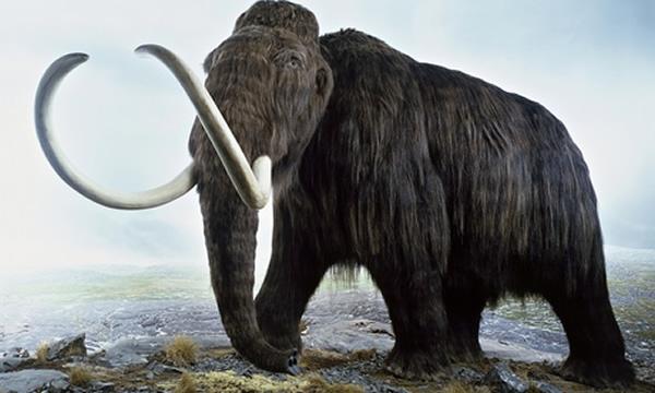 什么原因杀死了地球上的史前巨型动物