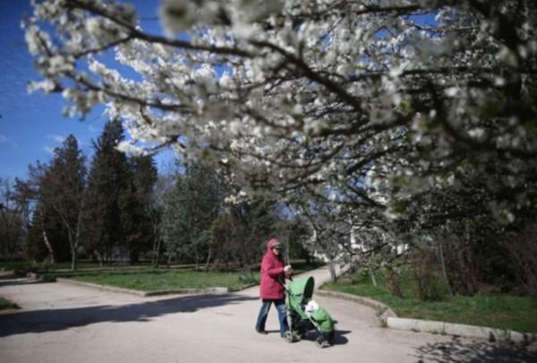2014春日美景:埃菲尔铁塔下樱花盛开