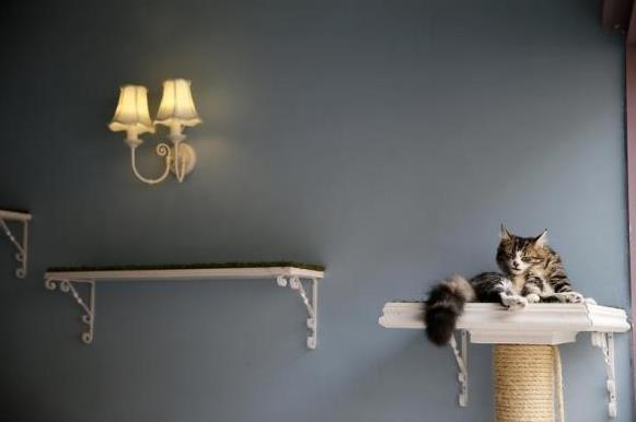 探访伦敦猫咪咖啡馆