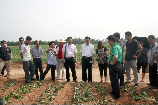 儋州八一总场组织种养户参观学习种植地瓜[图