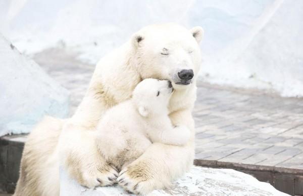 小北极熊_北极熊图片