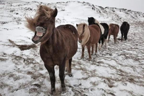 绝对萌死人的搞笑动物:张嘴大笑的马(组图)