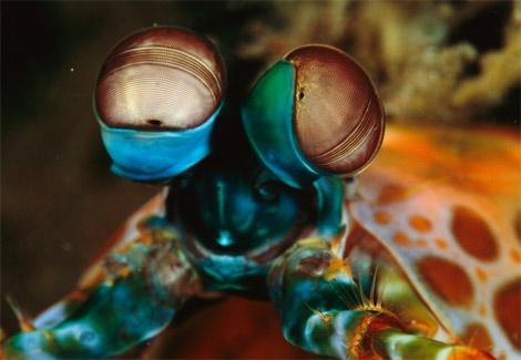 """盘点神秘罕见的海怪 果冻状的""""透明虾"""""""