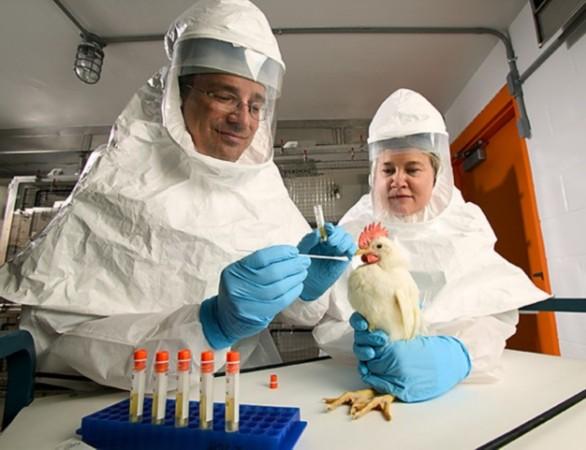 英国政府首席科学顾问mark walport在介绍该文件时强调,实验室动物
