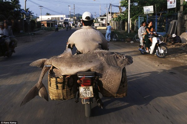 荷兰摄影师拍越南摩托车载物照片- Micro Rea