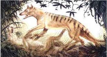 盘点全球30种已灭绝稀有动物