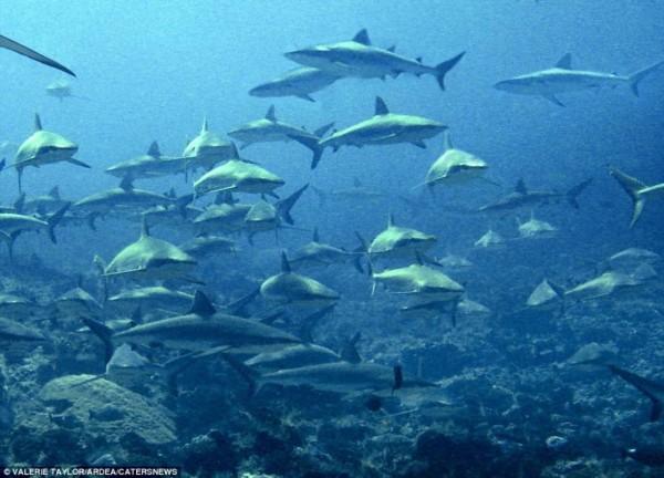 镜头直击自然界的动物大迁徙