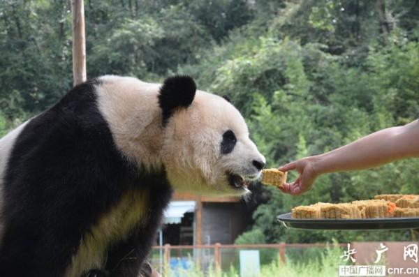 猴子捞月饼(图片由云南野生动物园提供)