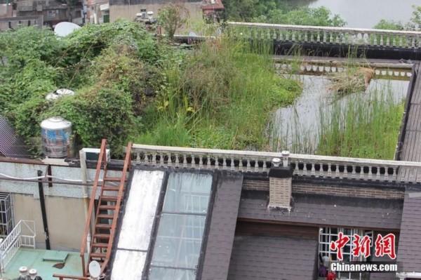 武汉居民楼顶建两层楼配别墅鱼池