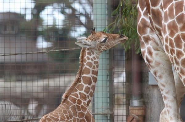 活泼可爱动物小宝宝:在悉心呵护下长大