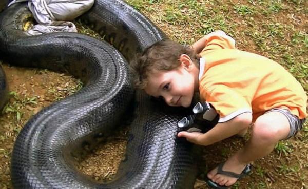 圭亚那教师捕获17英寸长巨型蟒蛇