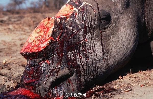 人类残忍杀害动物图片
