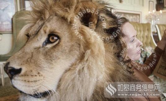 如皋新闻网讯如果给你一只狮子,你敢养吗?狮子有万兽之王和草原之王的称号,是最顶级的食肉动物。稍有不慎,就会被它咬伤。   然而美国一名女演员梅拉尼格里菲思却不以为然,将狮子当做宠物养在家中,每天与她打闹嬉戏,在澡堂里与狮子戏水。