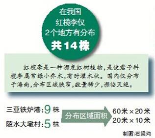 全国仅存14株红榄李全在海南报告建议建长期巡护