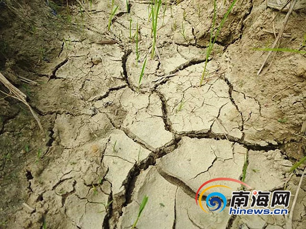 万宁召开会议解决农田灌溉问题确保明春农田用水到位