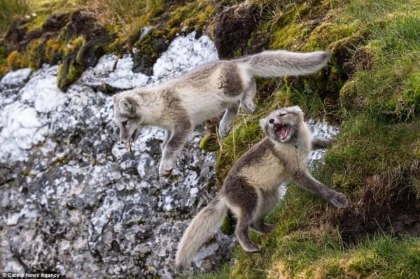壮美北极风光 冰山陡峭动物卖萌
