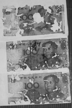 """<b>男子海口打工一年积蓄藏纸盒万元钞票被白蚁""""啃食""""</b>"""