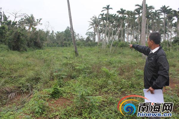 文昌村民栽种林木两年内被毁20多次森林公安介入调查