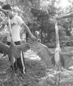 三亚市民曝捕杀野生白鹭照片公安:望提供地点