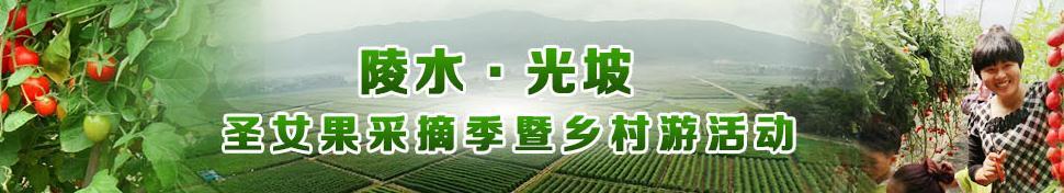 陵水圣女果采摘季暨乡村游准备就绪26日将启动