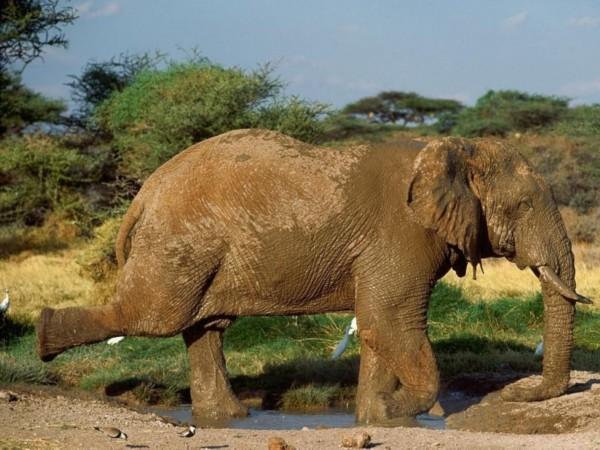 动物世界的瑜伽高手