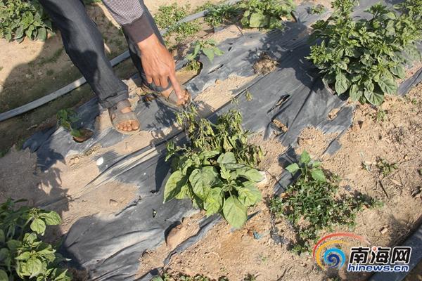 东方村民称村里设水泥搅拌站致自家10亩地绝产