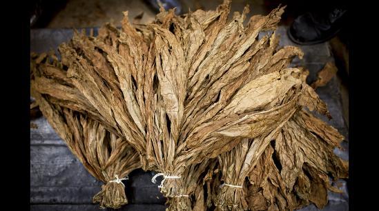 南海网 新闻中心 国际新闻 环球扫描    绑成捆的雪茄成品(网页截图)