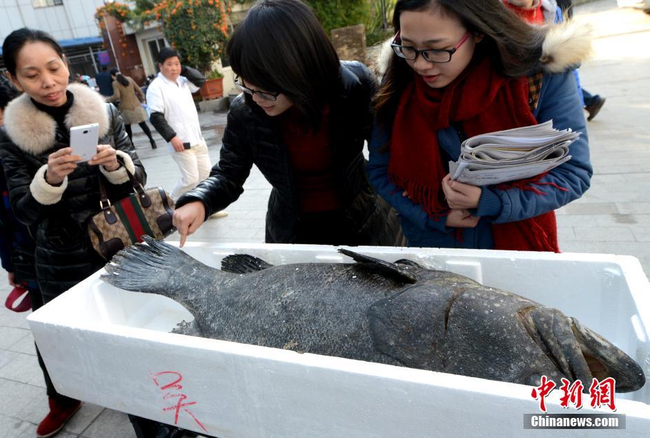 海南退休水产局副局长养南海爱国鱼被抢购一空明年将再运回万斤
