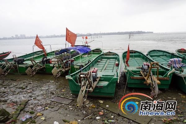 受台风重创的海口北港岛渔业恢复生产一渔民网箱养殖预期赚50万元