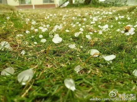 """海南儋州突降冰雹下了约10分钟市民惊呼""""奇闻"""""""