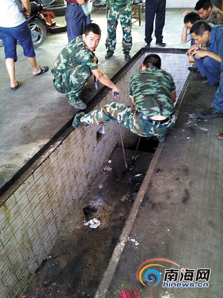 <b>2米长毒蛇搭上屯昌公交车乘客炸开了锅[图]</b>