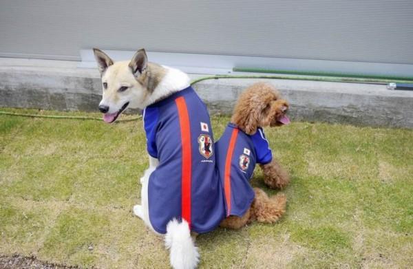 爆笑!看看日本的足球汪们 沙皮神模仿本田