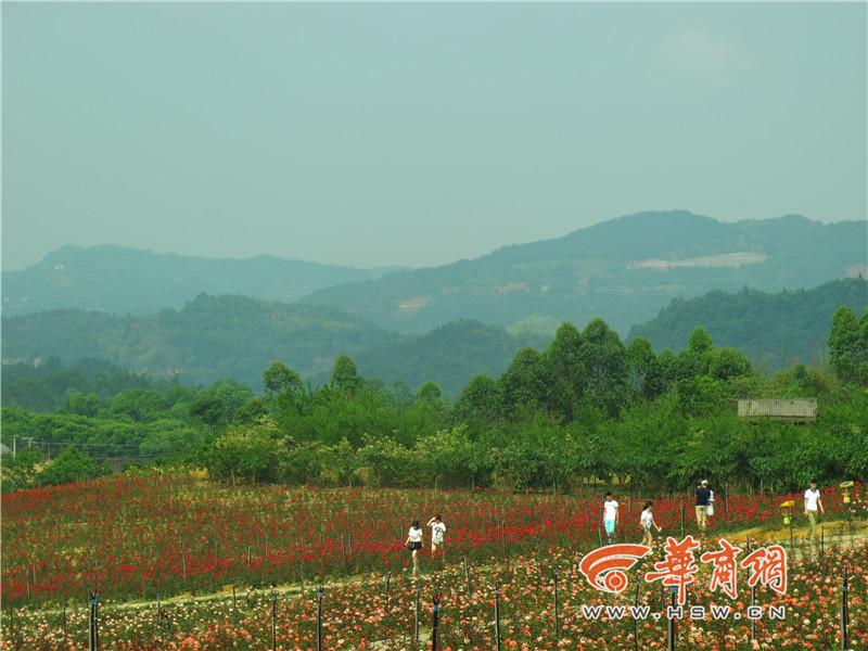 黑龙滩风景区还是四川省内为数不多,无需门票的国家4a级旅游景区,对