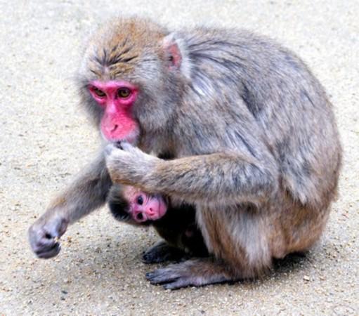动物园称不会为小猴 夏洛特 改名