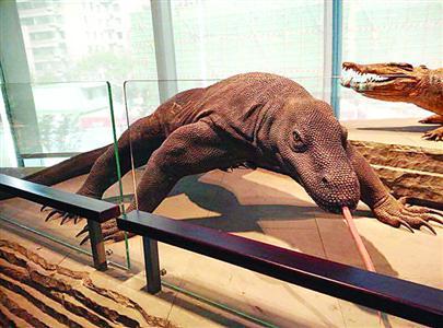 """自博馆里的""""科莫多巨蜥""""模型"""