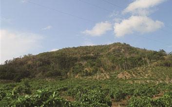 三亚将修复多座废弃矿山生态 已恢复约11万平米