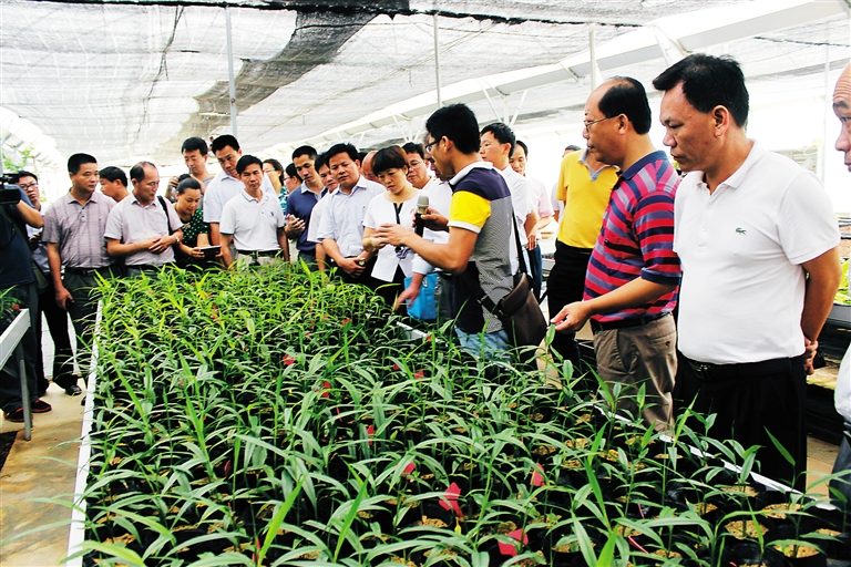 儋州引进百名党员专家服务三农手把手传授农技