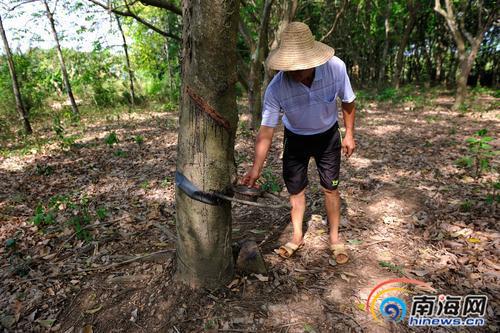 昌江:镇村干部全力组织抗旱将增加新的取水井