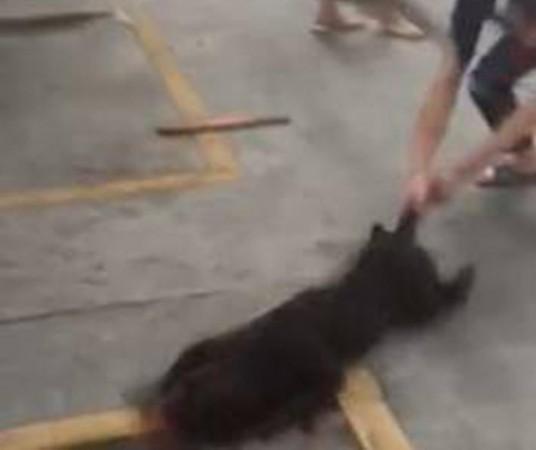 汕头血腥斗狗虐狗视频画面血腥 斗狗比赛咬死狗直播图片