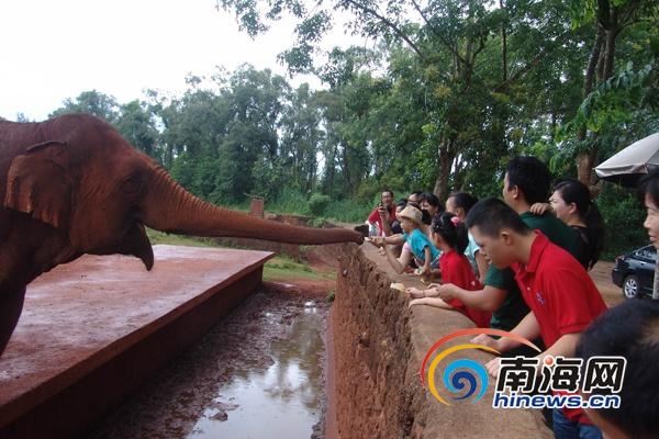 """""""特殊宝贝""""带爸爸到海南热带野生动植物园过父亲节"""