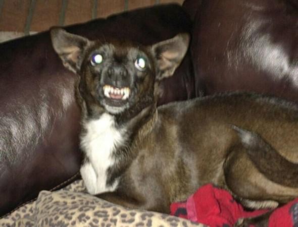 世界上最丑的狗比赛图片