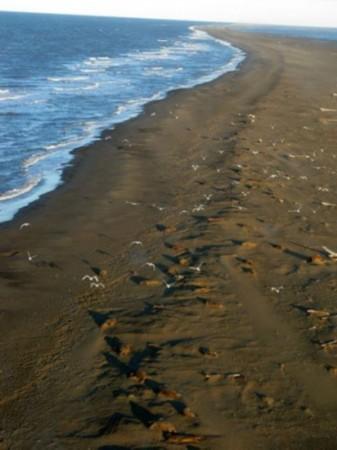 阿拉斯加北海岸侵蚀程度美最严重 威胁动物栖息