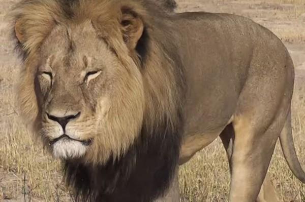 壁纸 动物 狮子 犀牛 野生动物 桌面 600_399