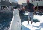 白海豚和平岩将视频