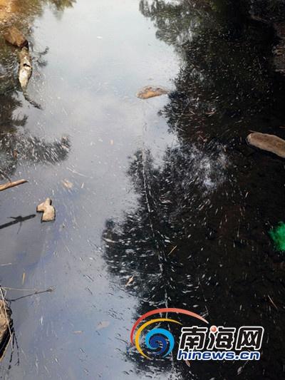 县委书记批示严查定安排污橡胶厂被停产整改罚6万元
