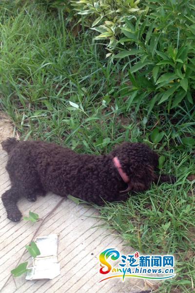 三亚宠物狗被撞死主人索赔5000元被认定敲诈行拘15天