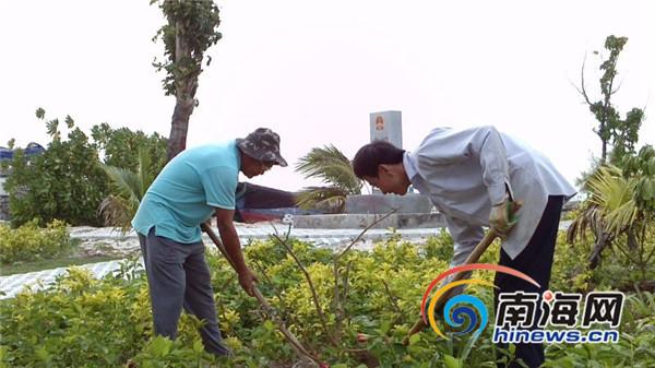 三沙赵述岛种上针叶樱桃 欲打造高效农业的示范产品图片